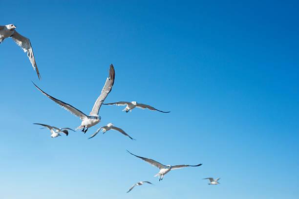 Seagulls In Flight Wall Art