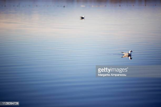 Seagulls in the rippled waters of a lake