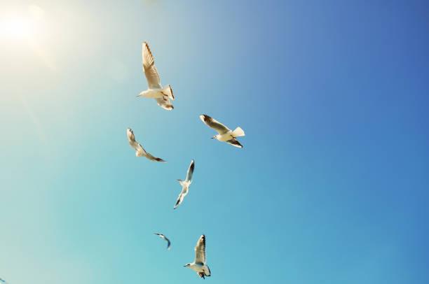 Seagulls Sky - Fine Art prints
