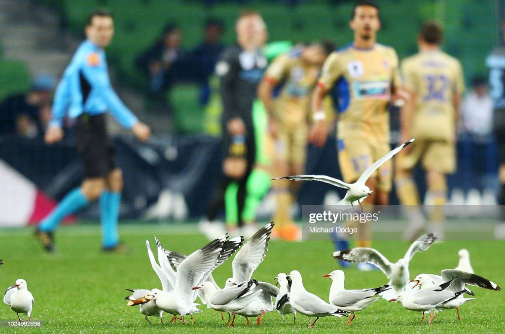 FFA Cup Rd of 16 - Melbourne City v Newcastle Jets : News Photo
