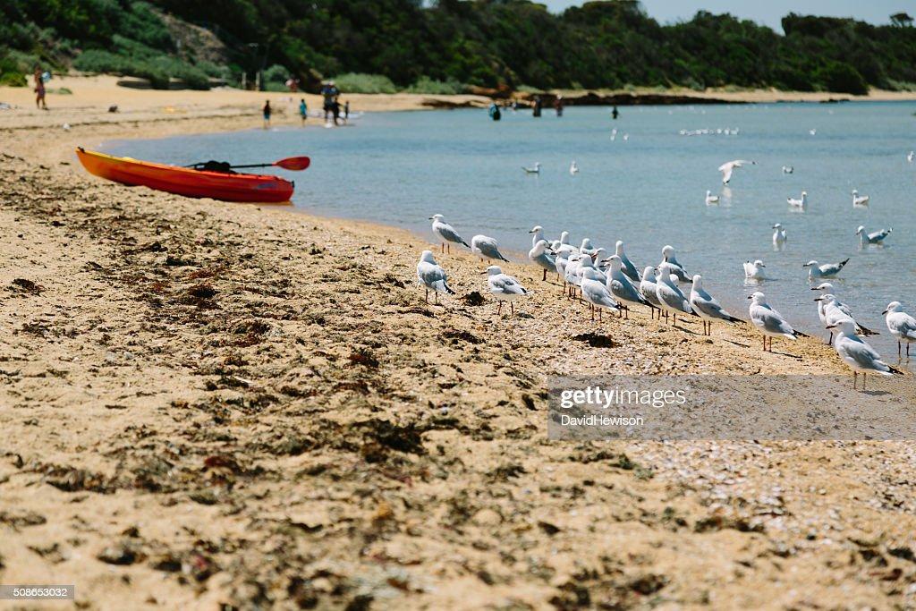 Seagulls on a beach : Stock Photo