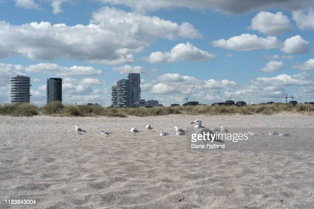 seagulls on a beach with a cityscape and blue sky with white clouds in the background - dorte fjalland fotografías e imágenes de stock