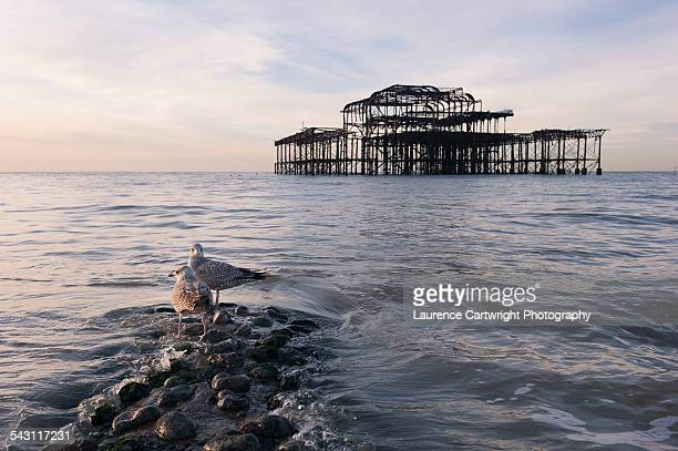 Seagulls on a jetty by Brighton's West Pier