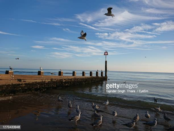 seagulls on beach against sky - bournemouth england stock pictures, royalty-free photos & images