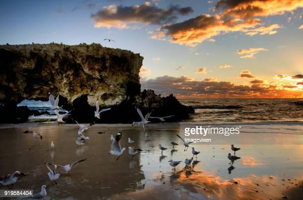 Seagulls on beach, Perth, Western Australia, Australia