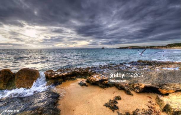 Seagulls on beach, Point Peron, Perth, Western Australia, Australia