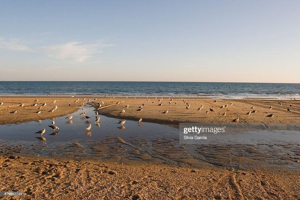 Seagulls on La Antilla Beach, Huelva : ストックフォト