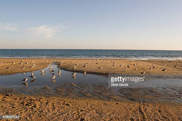 Seagulls on La Antilla Beach, Huelva