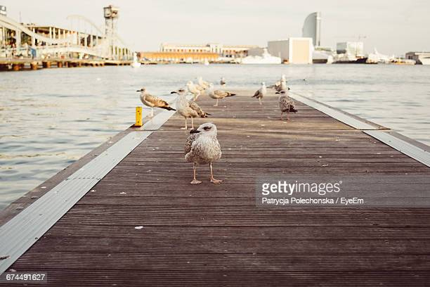 Seagulls On Pier Over River