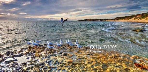 Seagulls on Rocky coastline, Point Peron, Perth, Western Australia, Australia