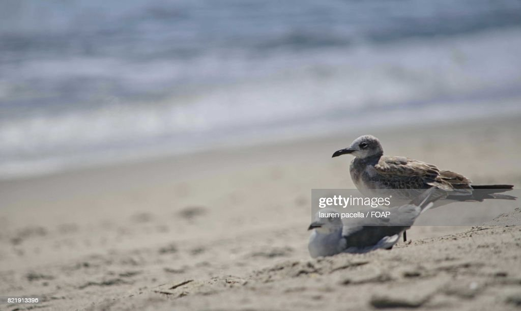 Seagulls on sand at beach : Stock Photo