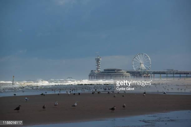 seagulls on the beach of scheveningen, the hague, netherlands - scheveningen stock pictures, royalty-free photos & images