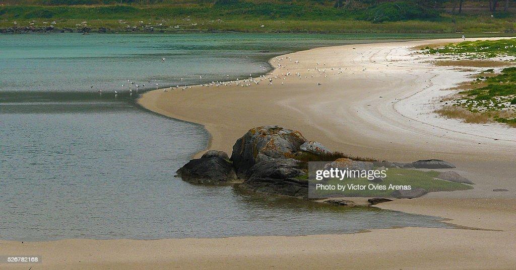 Seagulls on the Beach : Stock Photo