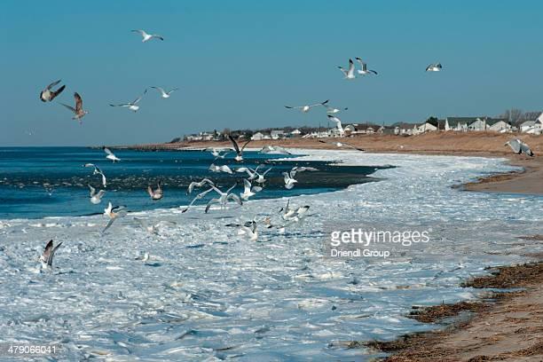 Seagulls over frozen Delaware Bay shoreline.