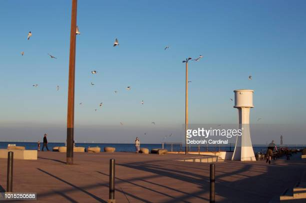 seagulls over the east beach at littlehampton - blue cardinal bird stock pictures, royalty-free photos & images