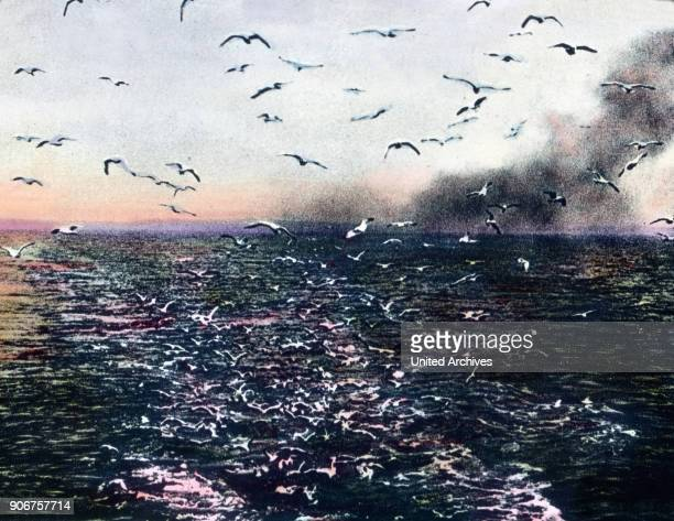 Seagulls over the ocean 1920s