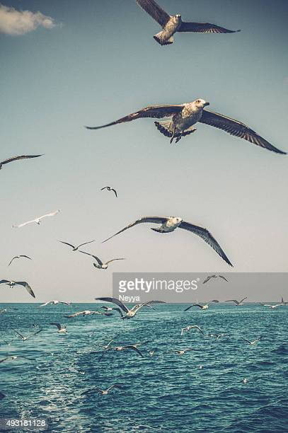 Seagulls over the Sea