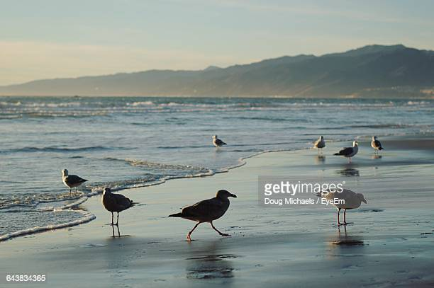 Seagulls Perching At Beach Against Sky