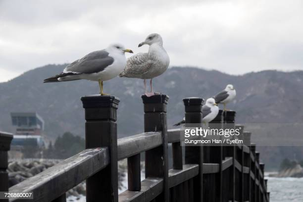 Seagulls Perching On Bridge Against Cloudy Sky