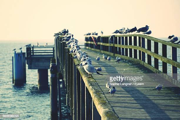seagulls perching on jetty railing in sea against sky - marina langner foto e immagini stock