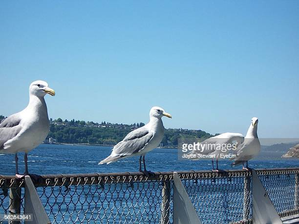 Seagulls Perching On Railing Against Sea And Clear Blue Sky
