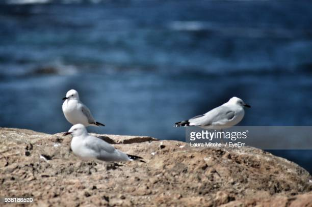 Seagulls Perching On Rock Formation