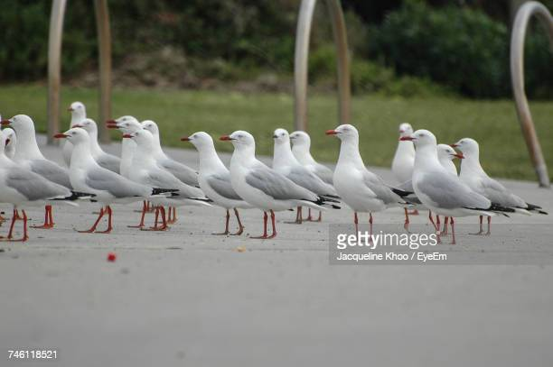 Seagulls Perching On Sand At Beach