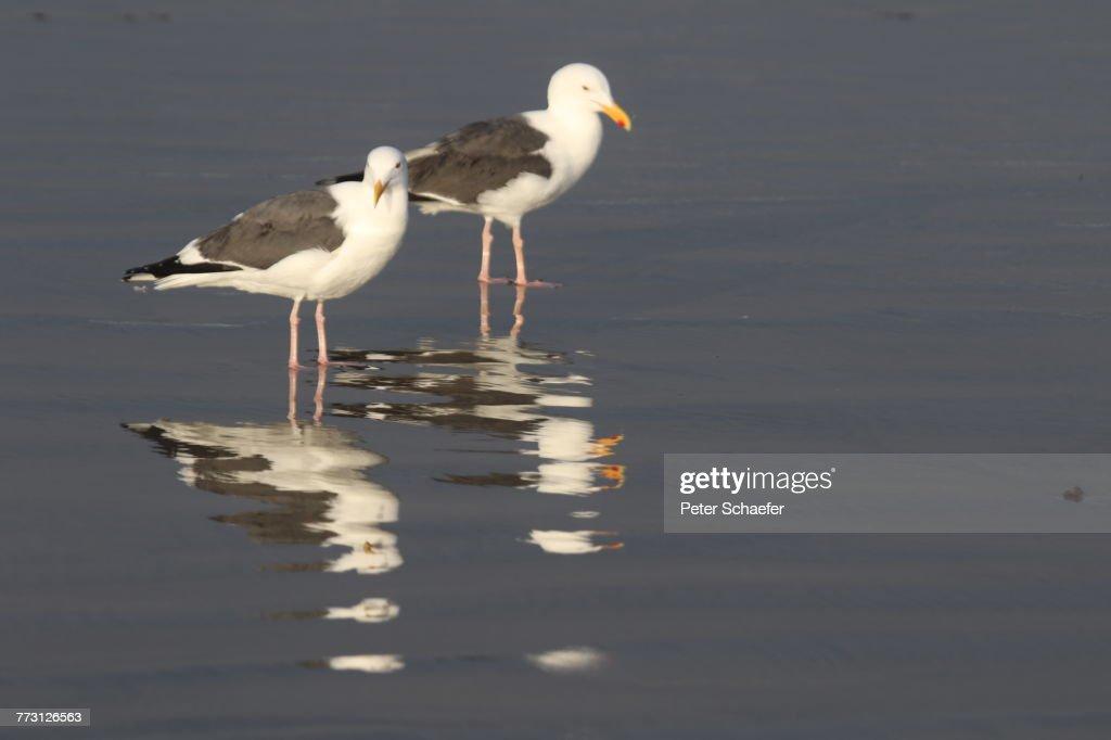 Seagulls Perching On Shore At Beach : Photo