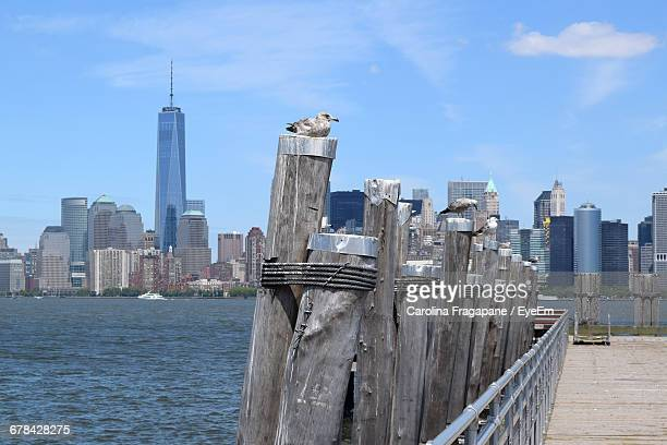 seagulls perching on wooden post by pier at hudson river against city - carolina fragapane stock pictures, royalty-free photos & images