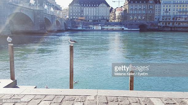 Seagulls Perching On Wooden Post By River