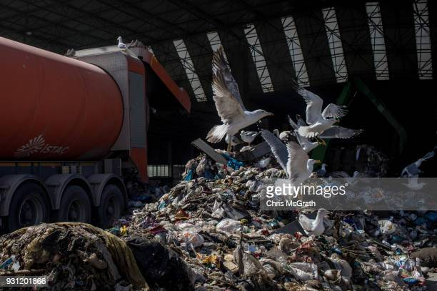 Seagulls pick through waste as it is delivered by trucks to the Sile Integrated Waste Facility Center on March 12 2018 in Istanbul Turkey Istanbul's...