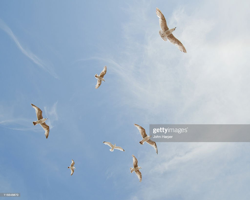 A Flock Of Seagulls Fine Art Prints Photos Com