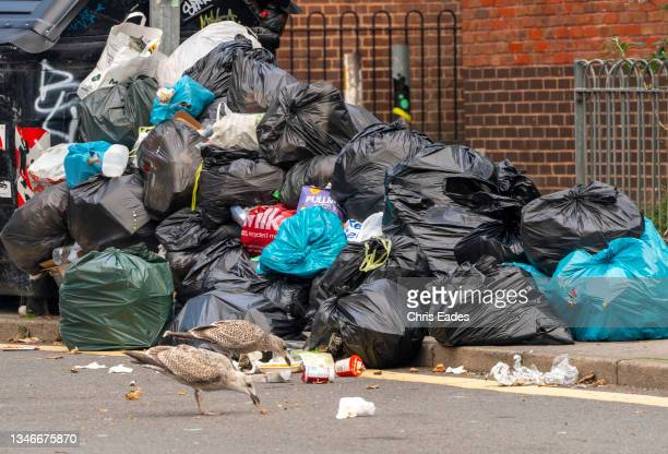 Seagulls rip open bin bags in search of food, exacerbating the problems caused by Brighton bin strike on October 14, 2021 in Brighton, England....