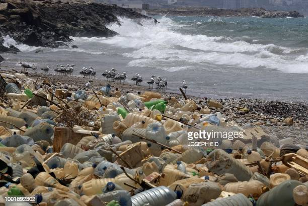 Seagulls search for food near a sewage discharge area next to piles of plastic bottles and gallons washed away by the water on the seaside of Ouzai...