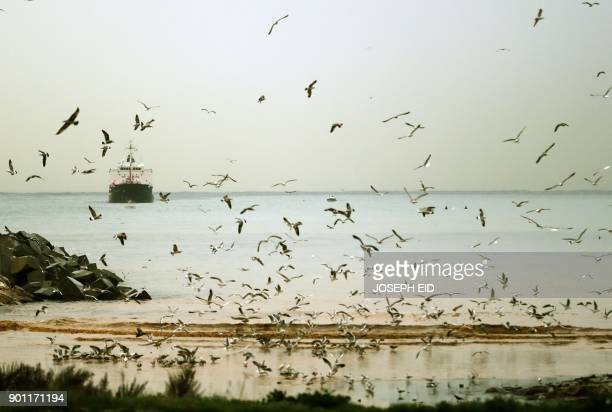Seagulls search for food on the shores of Beirut's northeastern suburb of Daoura on December 4 2018 / AFP PHOTO / JOSEPH EID