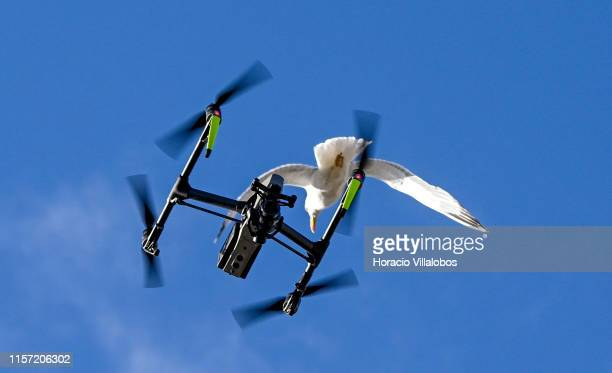 Seagulls try to aggress a TV drone on the first day of Longines Global Champion Tour on June 20, 2019 in Cascais, Portugal. The city plays host to...