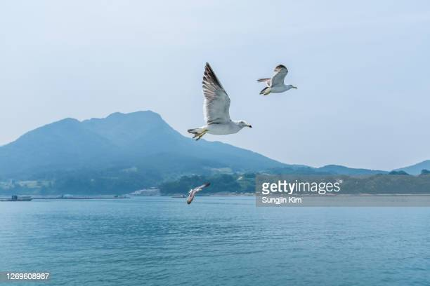 seagulls viewed from passenger ship - sungjin kim stock pictures, royalty-free photos & images