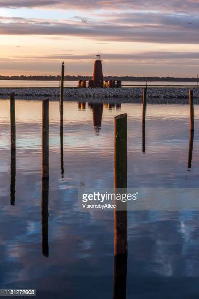 seagulls with anhingas who are drying their wings while perched on the posts of an abandoned pier at sunrise on a cold winter morning at the shore of lake toho in kissimmee, florida - kissimmee stock pictures, royalty-free photos & images