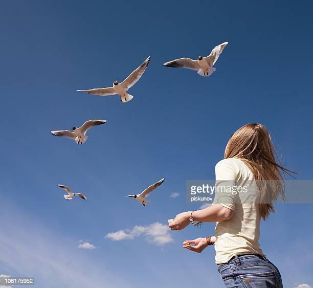 Seaguls feeding