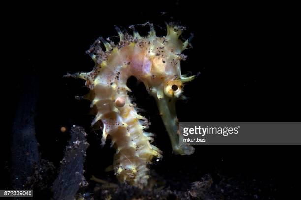 récif de l'hippocampe - hippocampe photos et images de collection