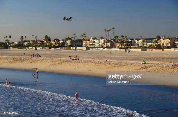 seal beach - seal beach stock pictures, royalty-free photos & images