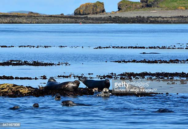 Seal colony.