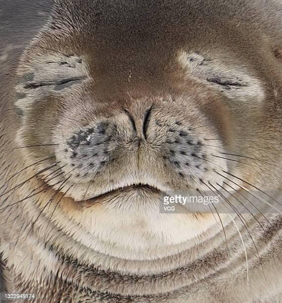 Seal is seen on December 14, 2019 in Antarctica.