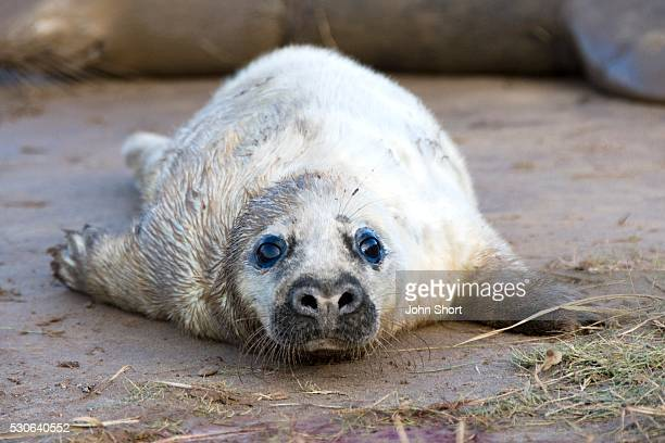 seal lying on ground - depression sadness stock pictures, royalty-free photos & images