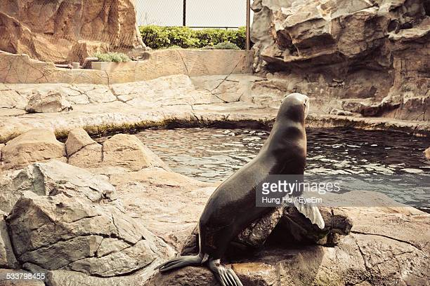 Seal On Rock In Zoo