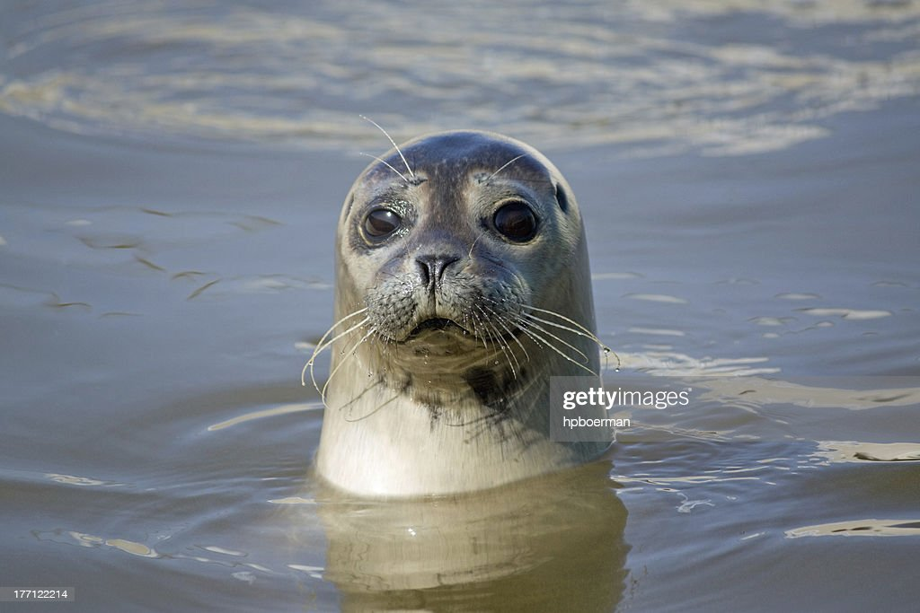 Free seal Images Pictures and RoyaltyFree Stock Photos