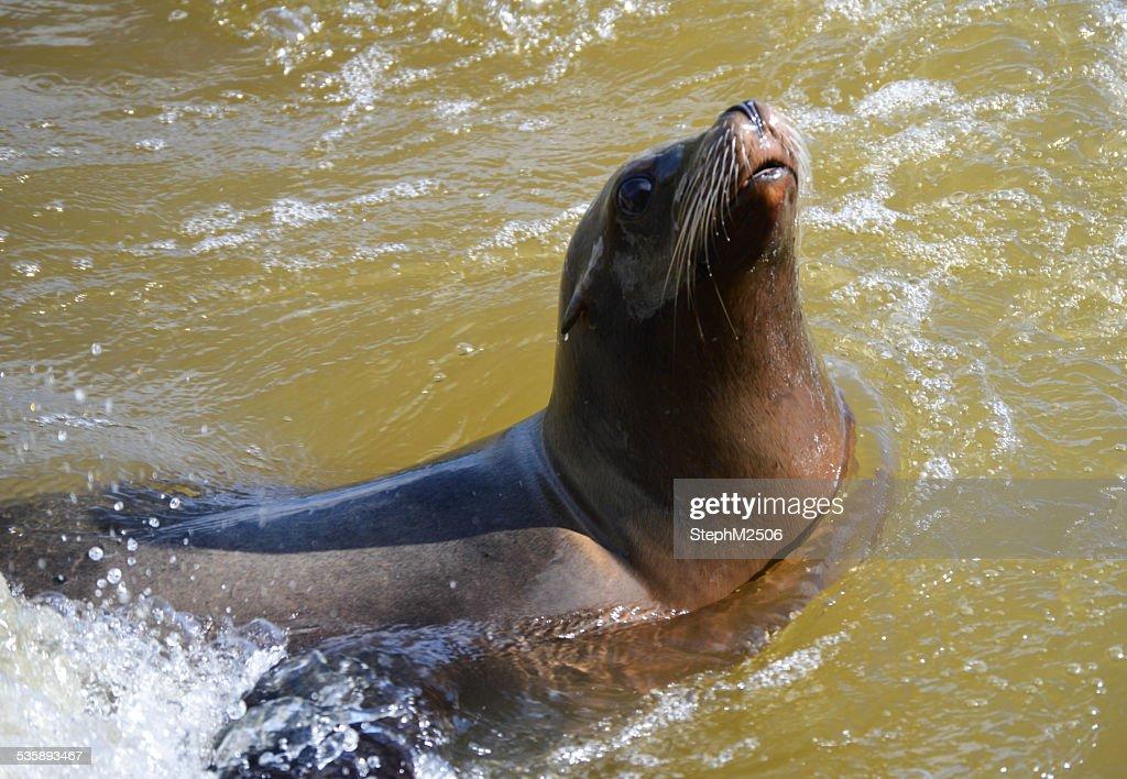 Seal : Stock-Foto