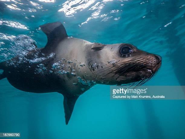 Seal Play