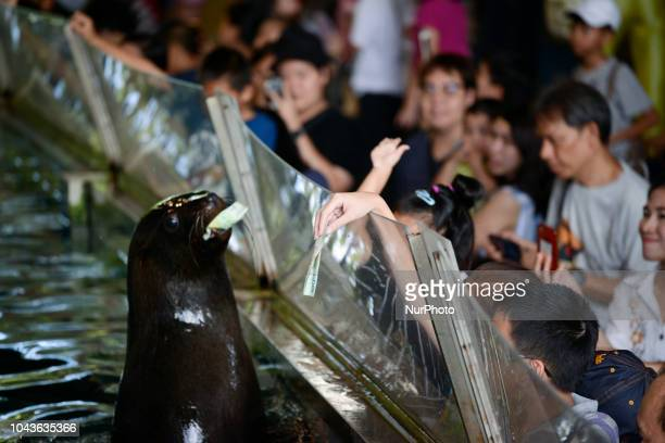 A seal show close to an aquarium glass as visitors gather for a closer look following a Seal show at Dusit Zoo in Bangkok Thailand 30 September 2018...