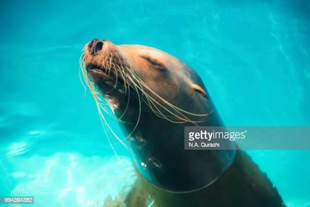 A seal thinking deep